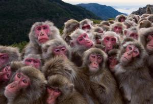 monkeys_together